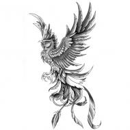 Wzór Tatuażu Feniks Monika Wypożyczalnia Sprzętu